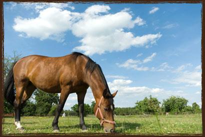 Grass Saver Pellets - Takanini Horse Feed