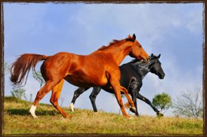 Horse Feed NZ